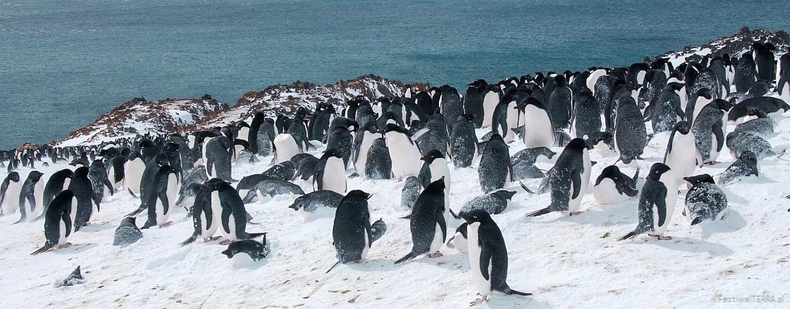 Antarktyka – najdłuższa zima w życiu