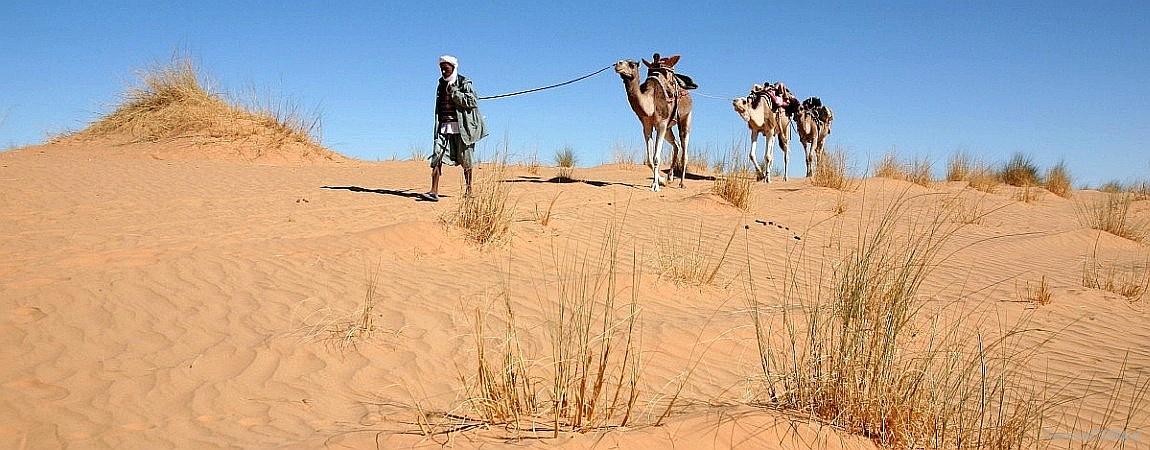 Mauretania – pustynia rządzi!